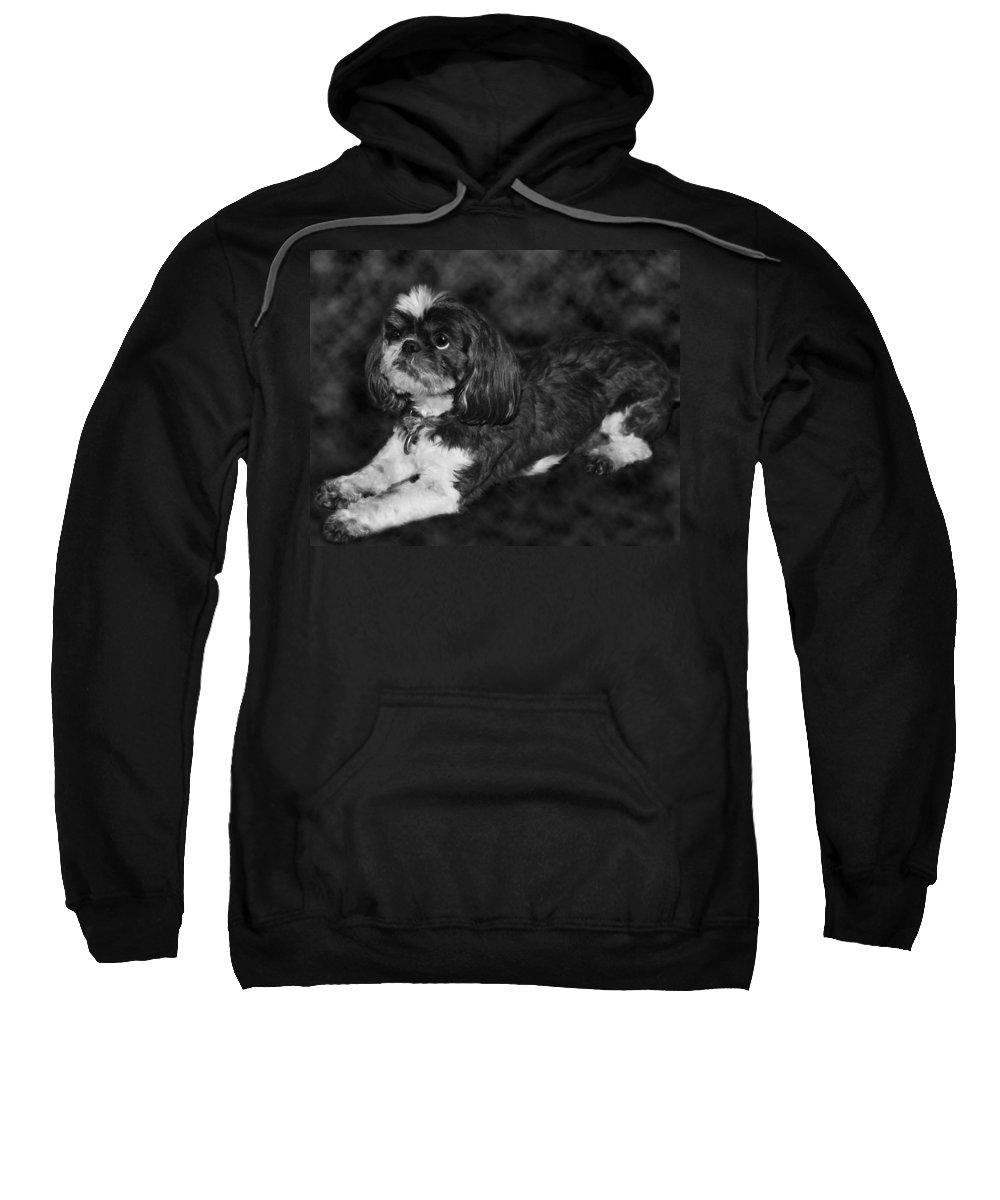 3scape Sweatshirt featuring the painting Shih Tzu by Adam Romanowicz