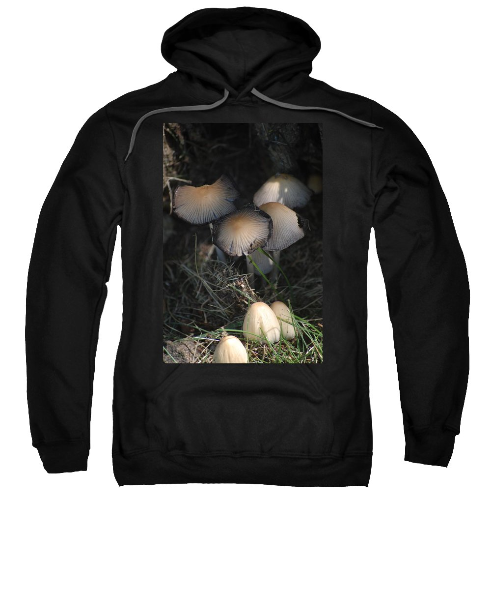 Digital Photograph Sweatshirt featuring the photograph Shrooms 1 by David Lane