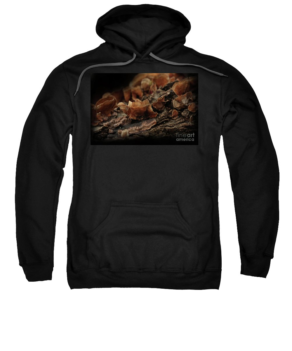 Mushroom Photography Sweatshirt featuring the photograph Shrooms by Kim Henderson