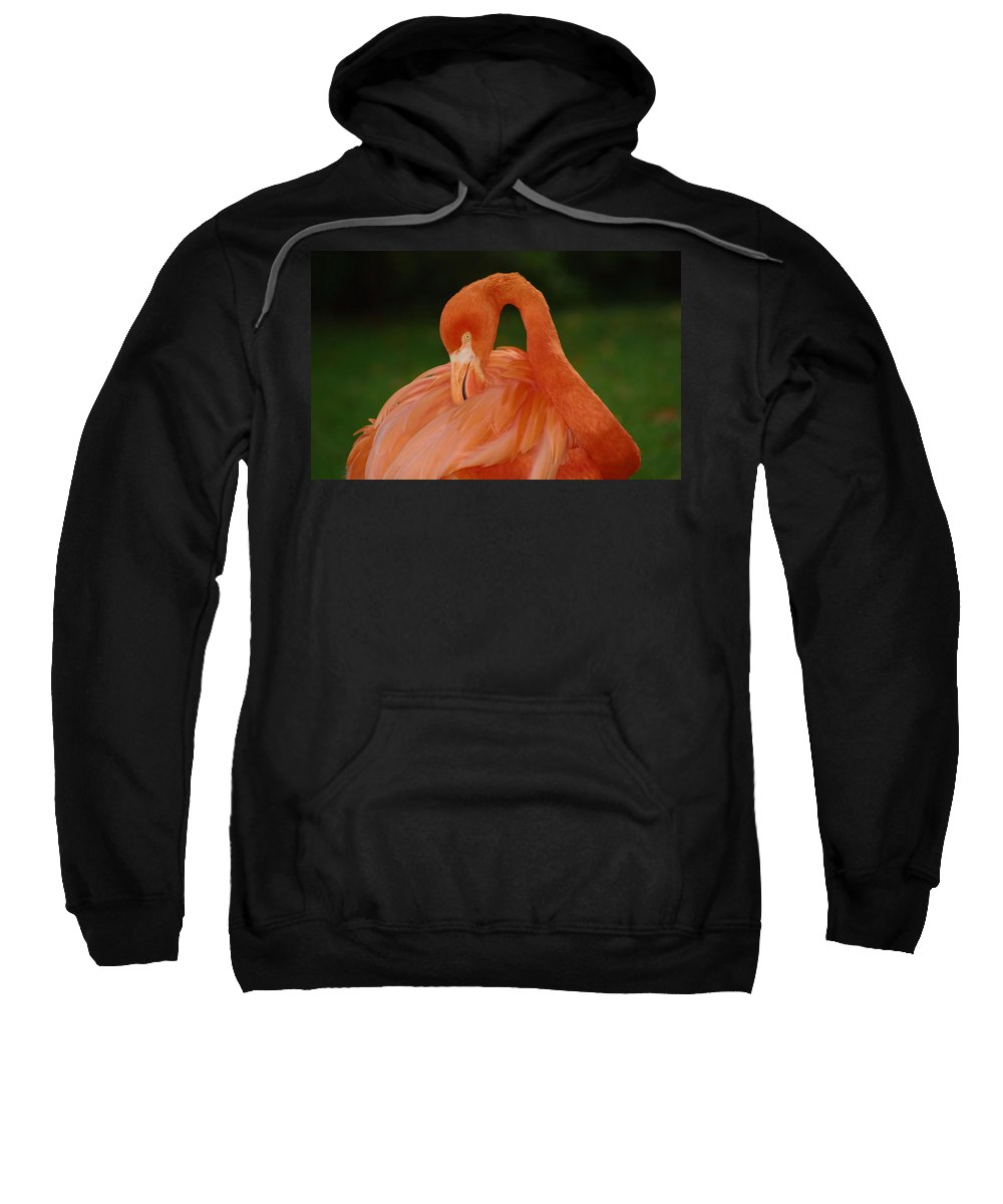 Flamingo Sweatshirt featuring the photograph shy by Gaby Swanson