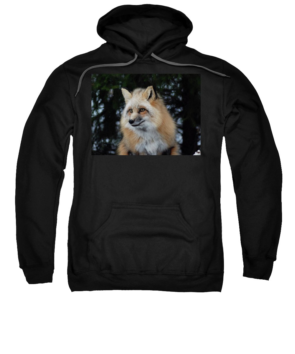Fox Sweatshirt featuring the photograph Sierra's Profile by Richard Bryce and Family