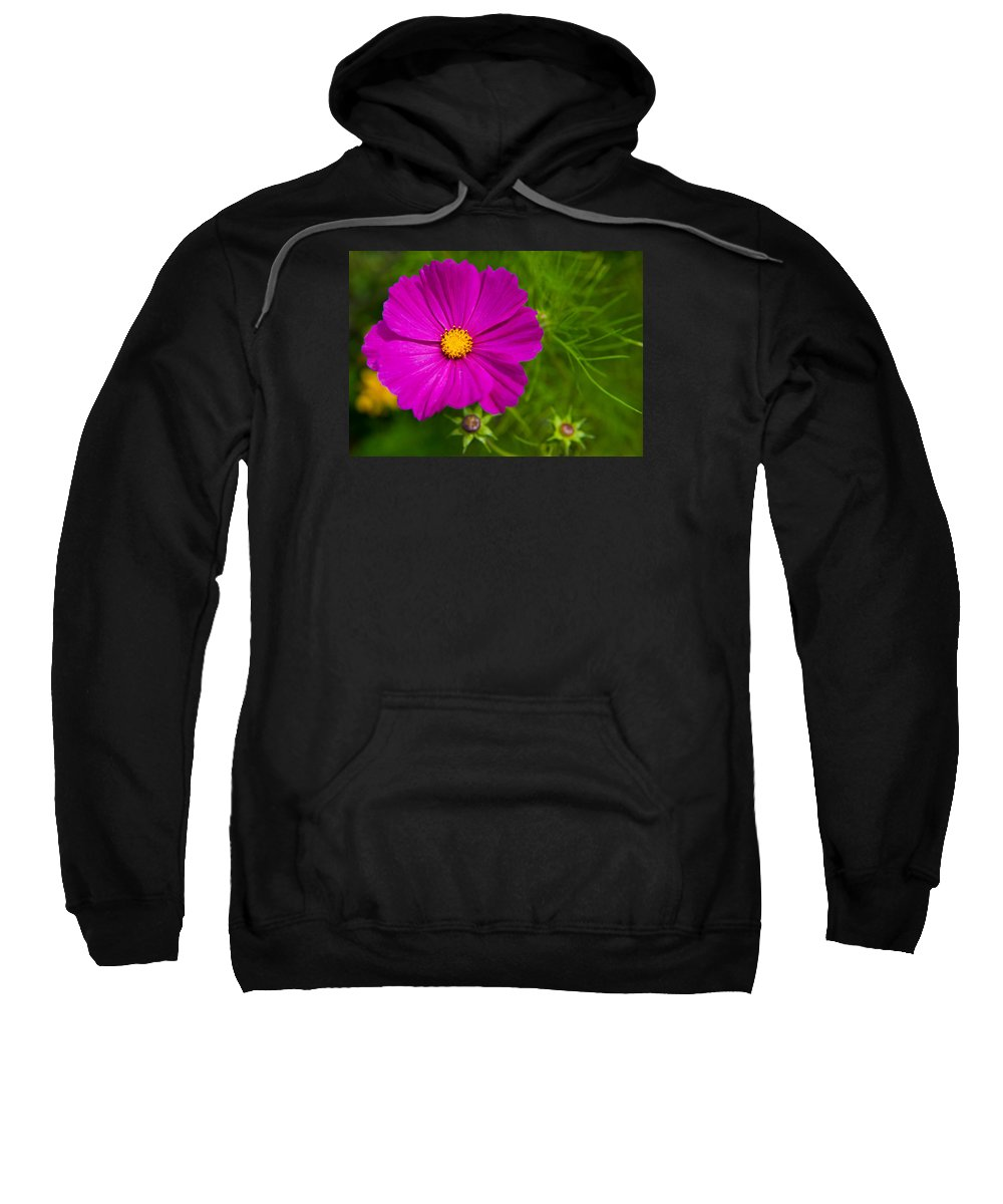 Cosmos Sweatshirt featuring the photograph Single Purple Cosmos Flower by Helen Northcott