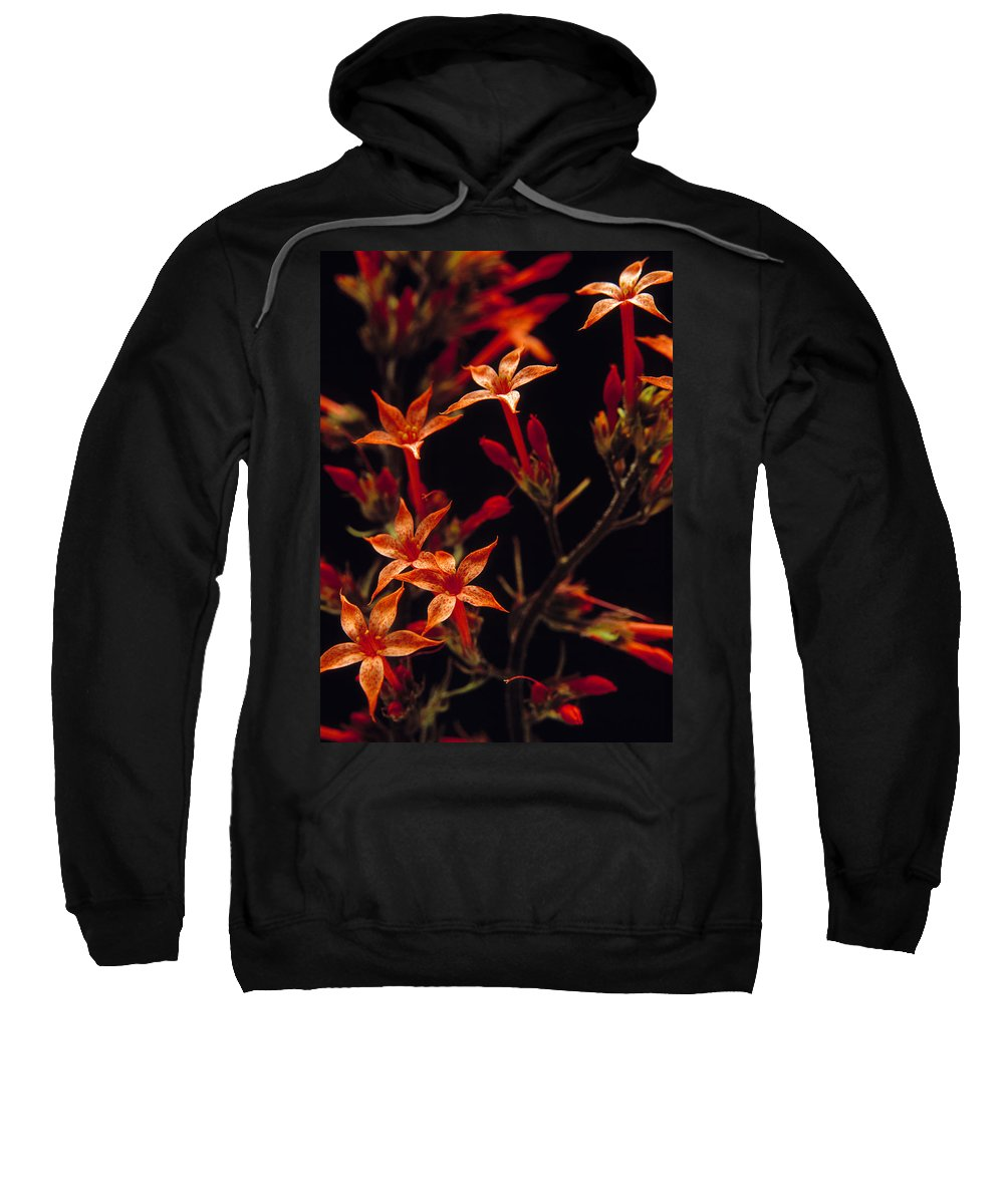 Wildflowers Sweatshirt featuring the photograph Sky Rocket by Leland D Howard