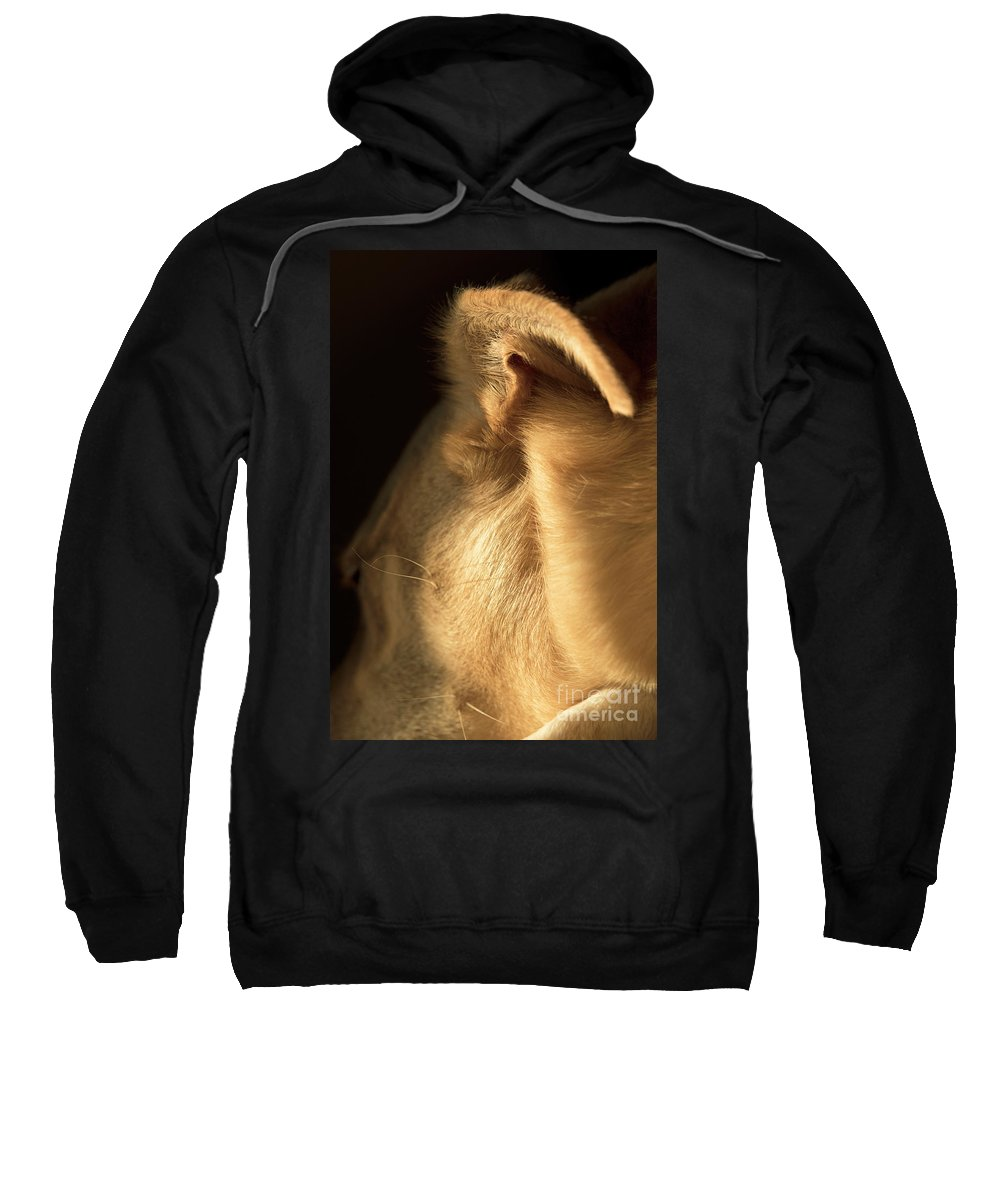 Dog Sweatshirt featuring the photograph Sleeping Dog by Michelle Himes