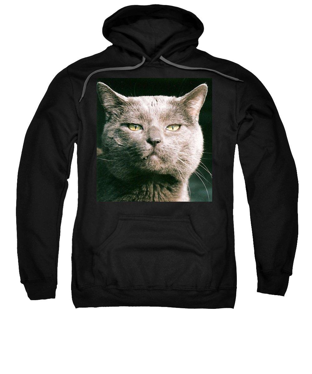 Cat Sweatshirt featuring the greeting card Smokey by Lauri Novak