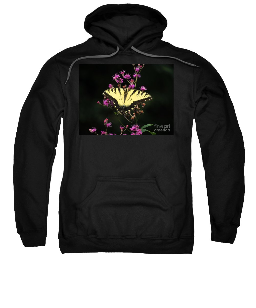 Butterfly Sweatshirt featuring the photograph Smoky Mountain Butterfly by ART-C Jason and Mirah McCall
