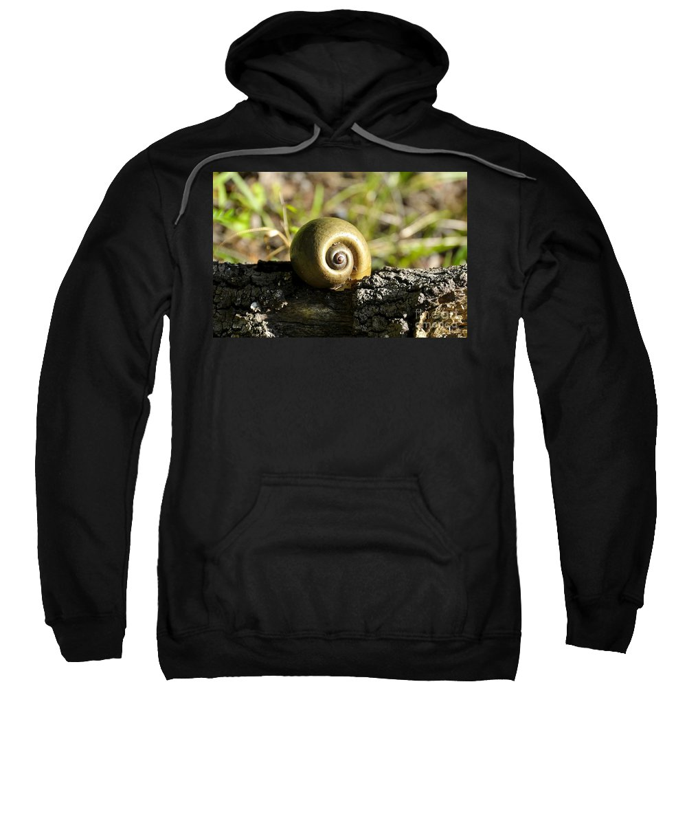 Snail Sweatshirt featuring the photograph Snail by David Lee Thompson