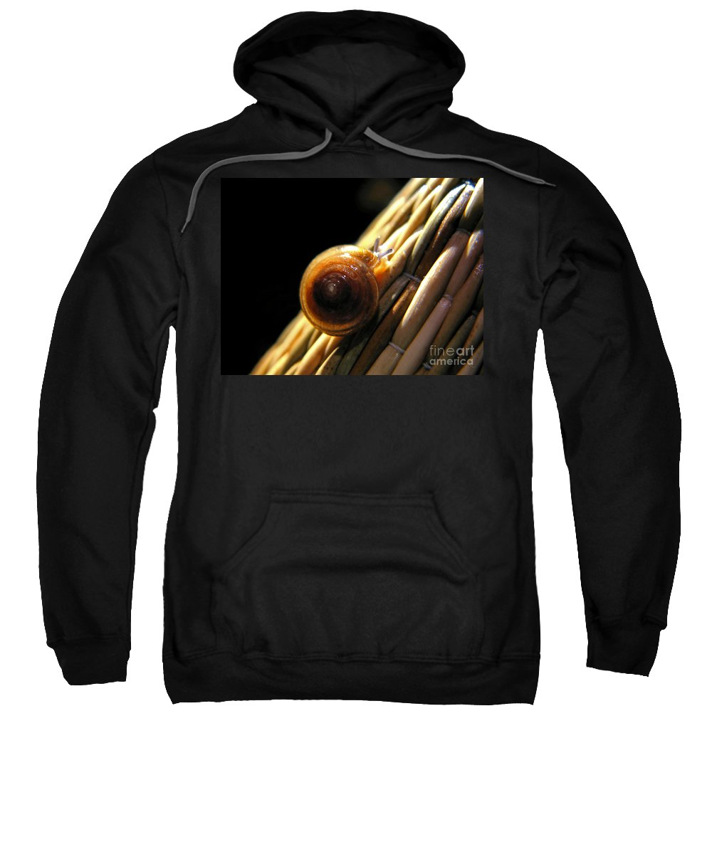 Macro Sweatshirt featuring the photograph Snail by Todd Blanchard