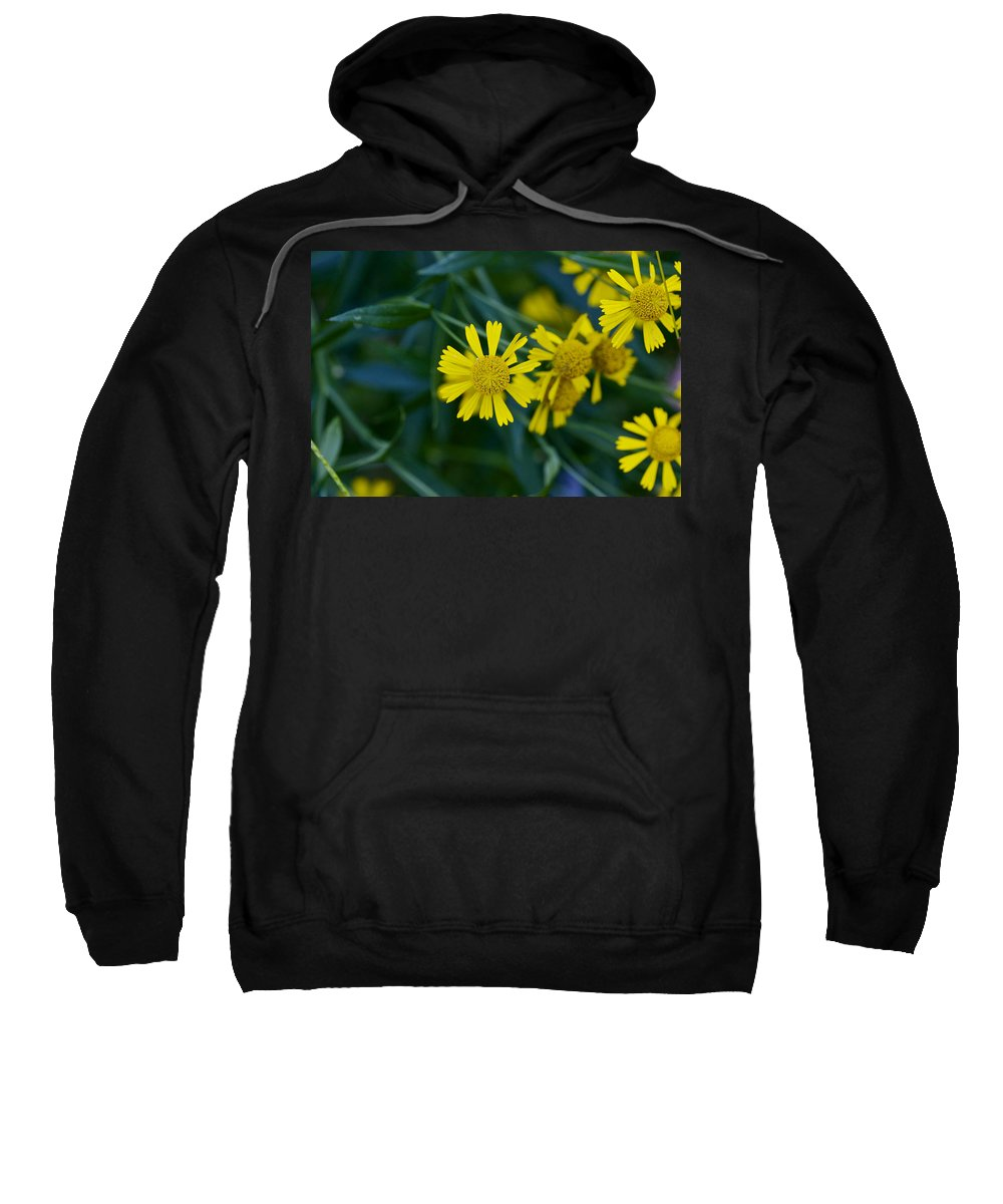 Abstract Sweatshirt featuring the photograph Sneezeweed by Jack R Perry