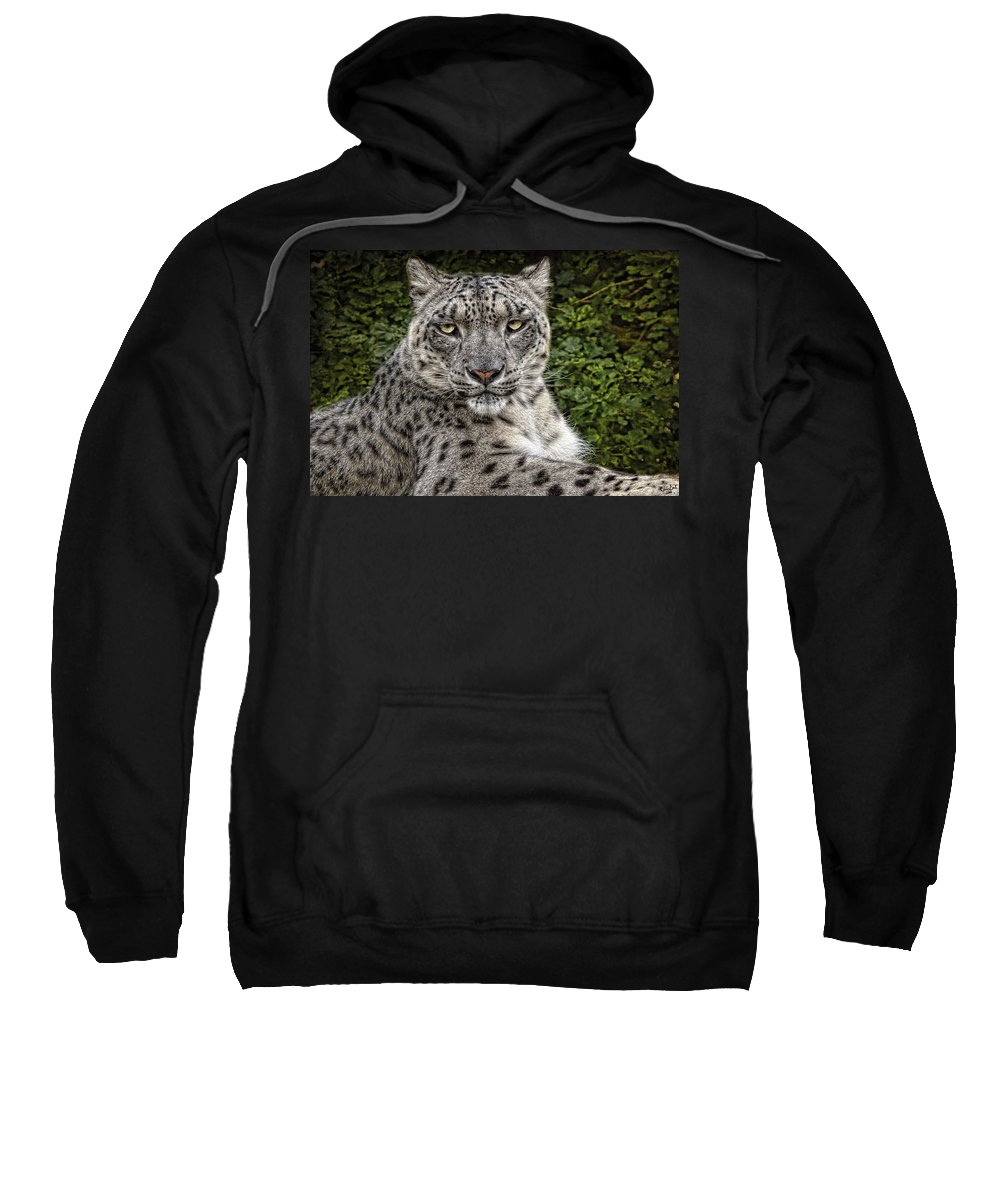 Snow Leopard Sweatshirt featuring the photograph Snow Leopard by Chris Lord