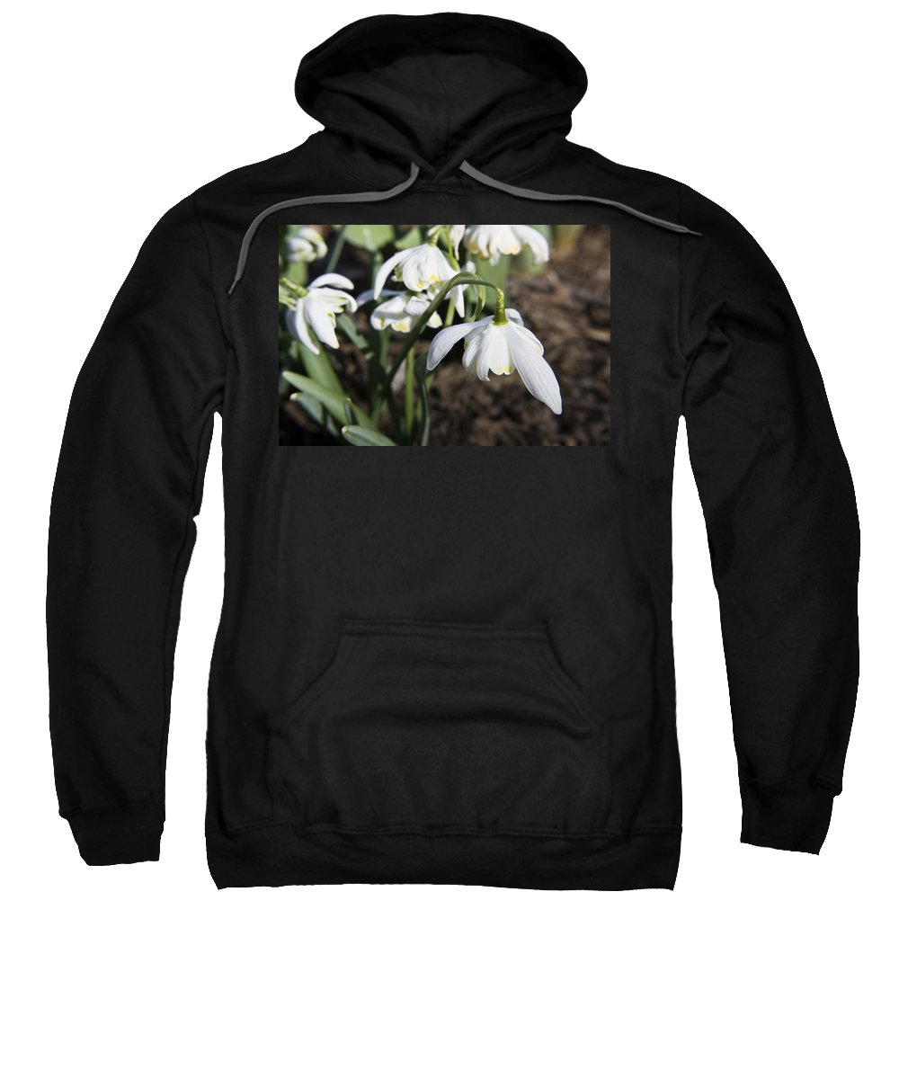 Snowdrops Sweatshirt featuring the photograph Snowdrops by Teresa Mucha