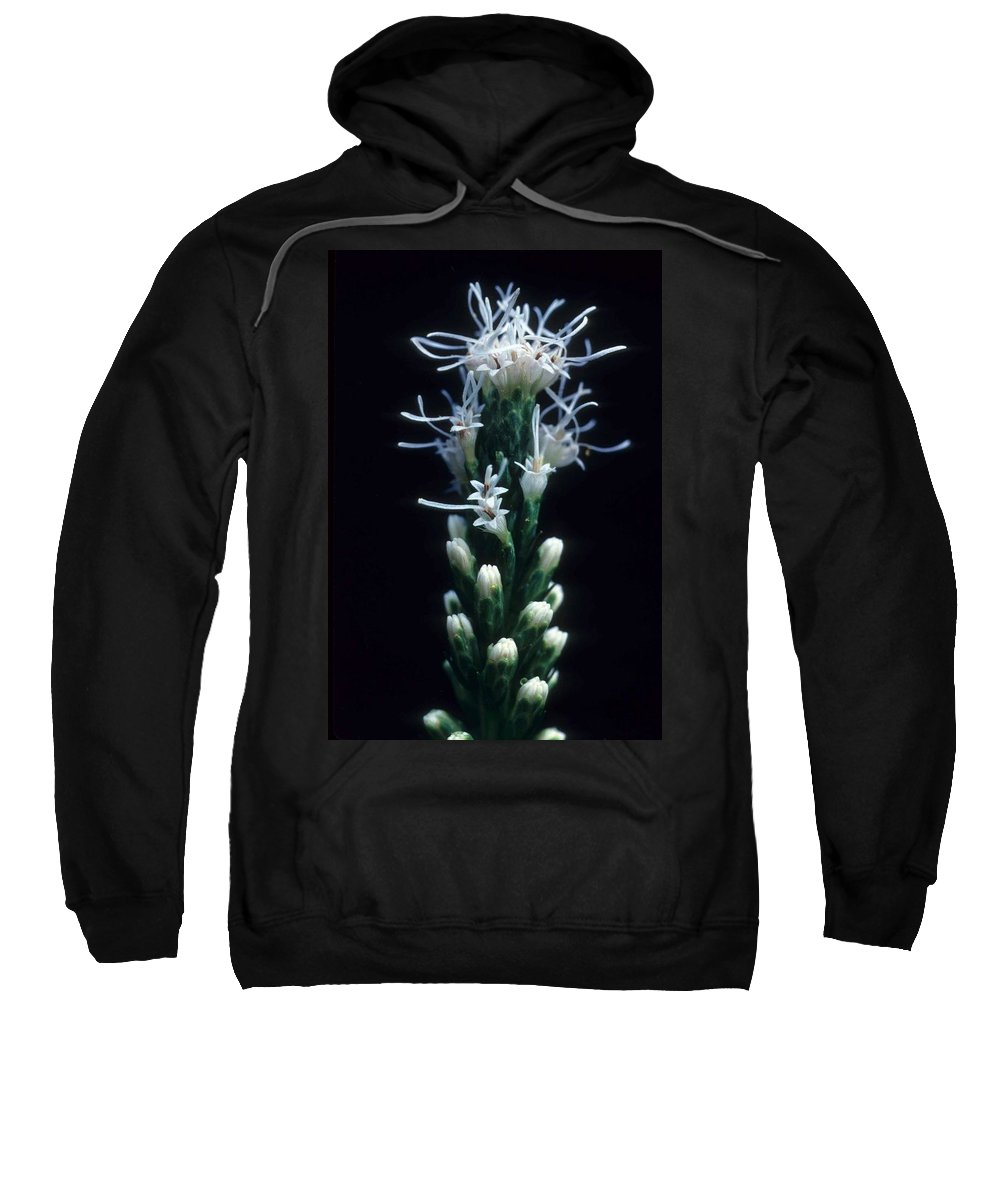 Flower Sweatshirt featuring the photograph Snowflake Flower by Laurie Paci