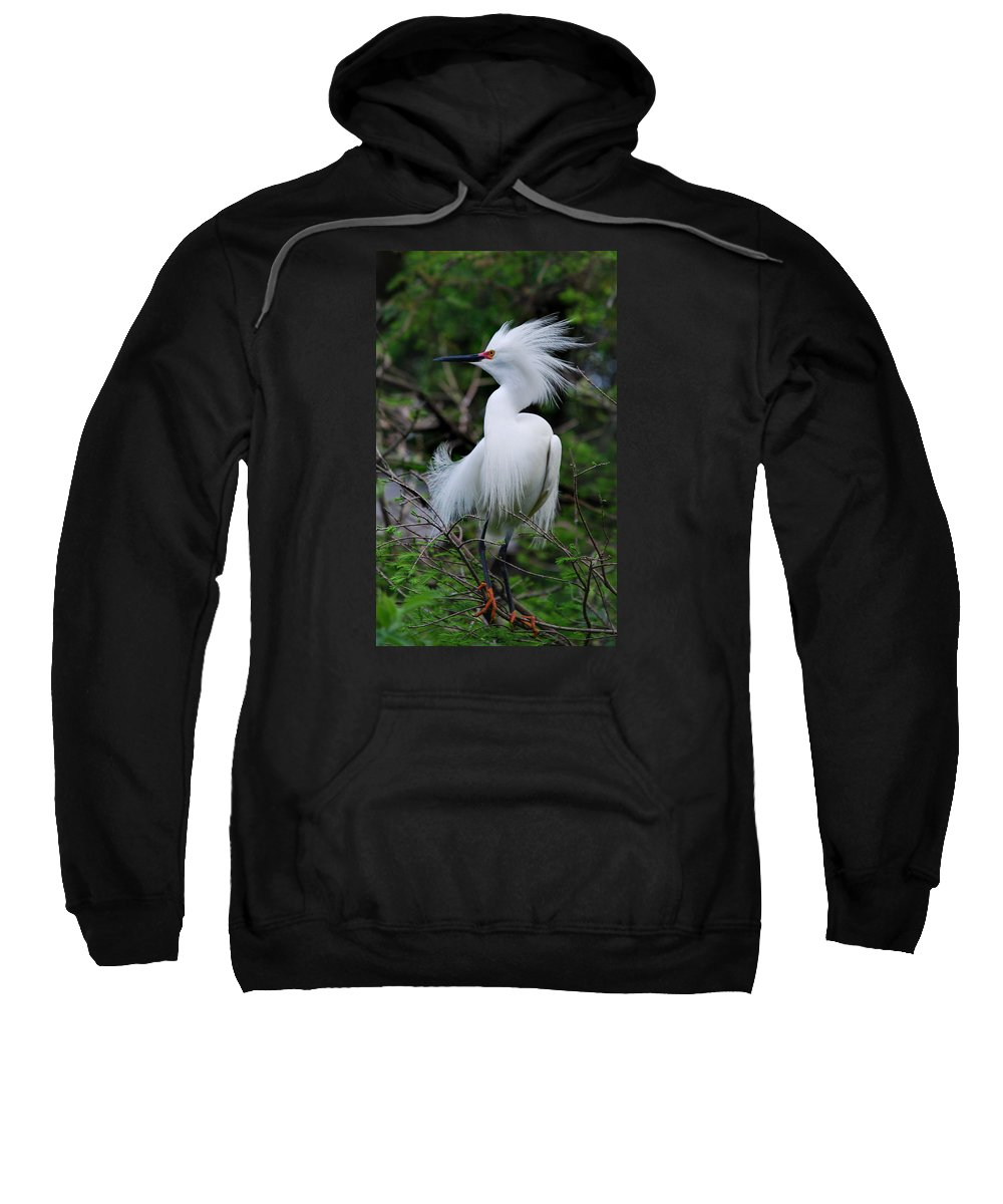 Names Of Birds Sweatshirt featuring the photograph Snowy Attitude by Skip Willits
