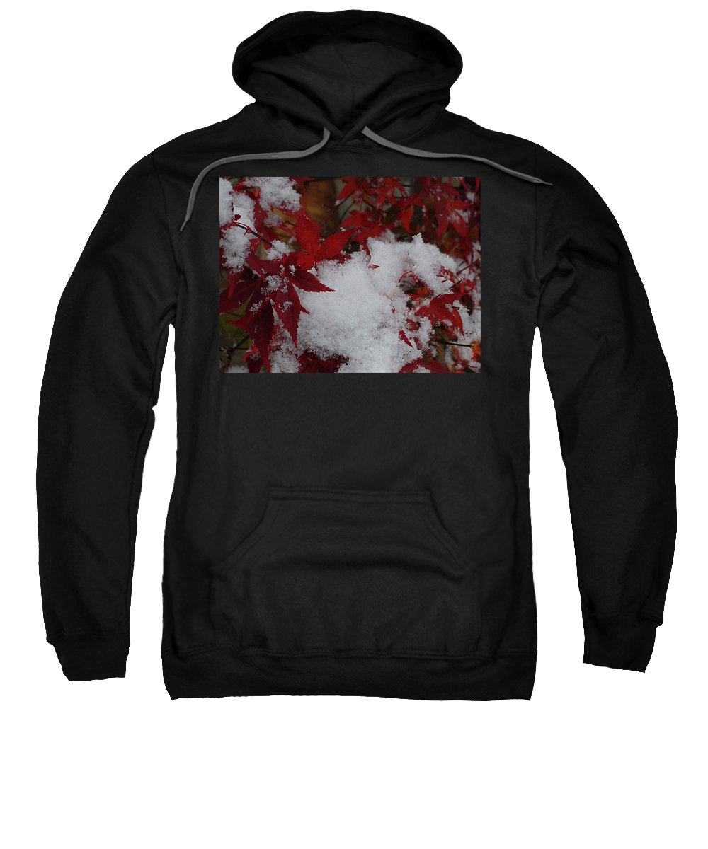 Red Sweatshirt featuring the photograph Snowy Red Maple by Shirley Heyn