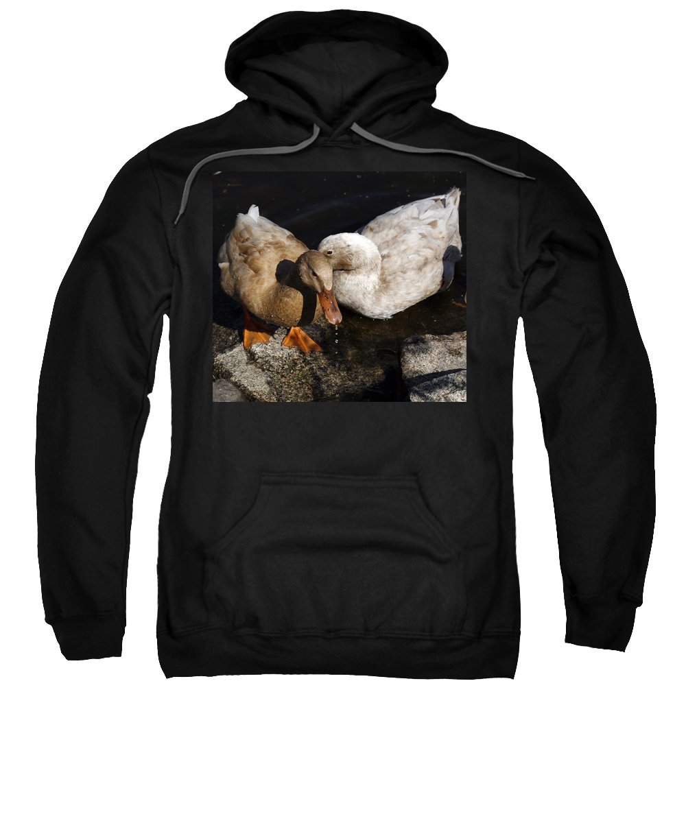 Bird Sweatshirt featuring the photograph Snuggles by Marilyn Hunt
