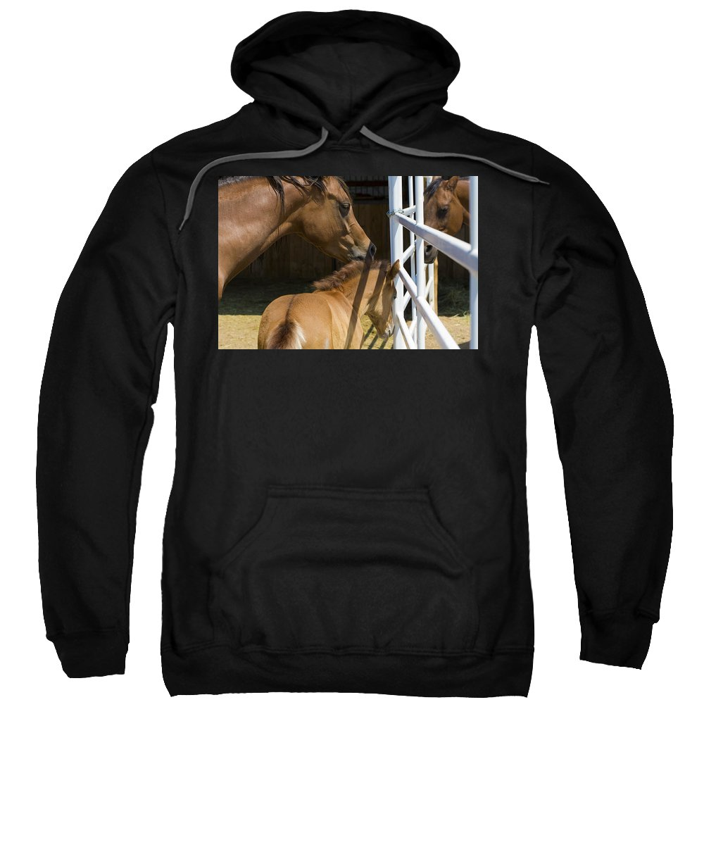 Mother Sweatshirt featuring the photograph Socializing Amongst Horses by Marilyn Hunt