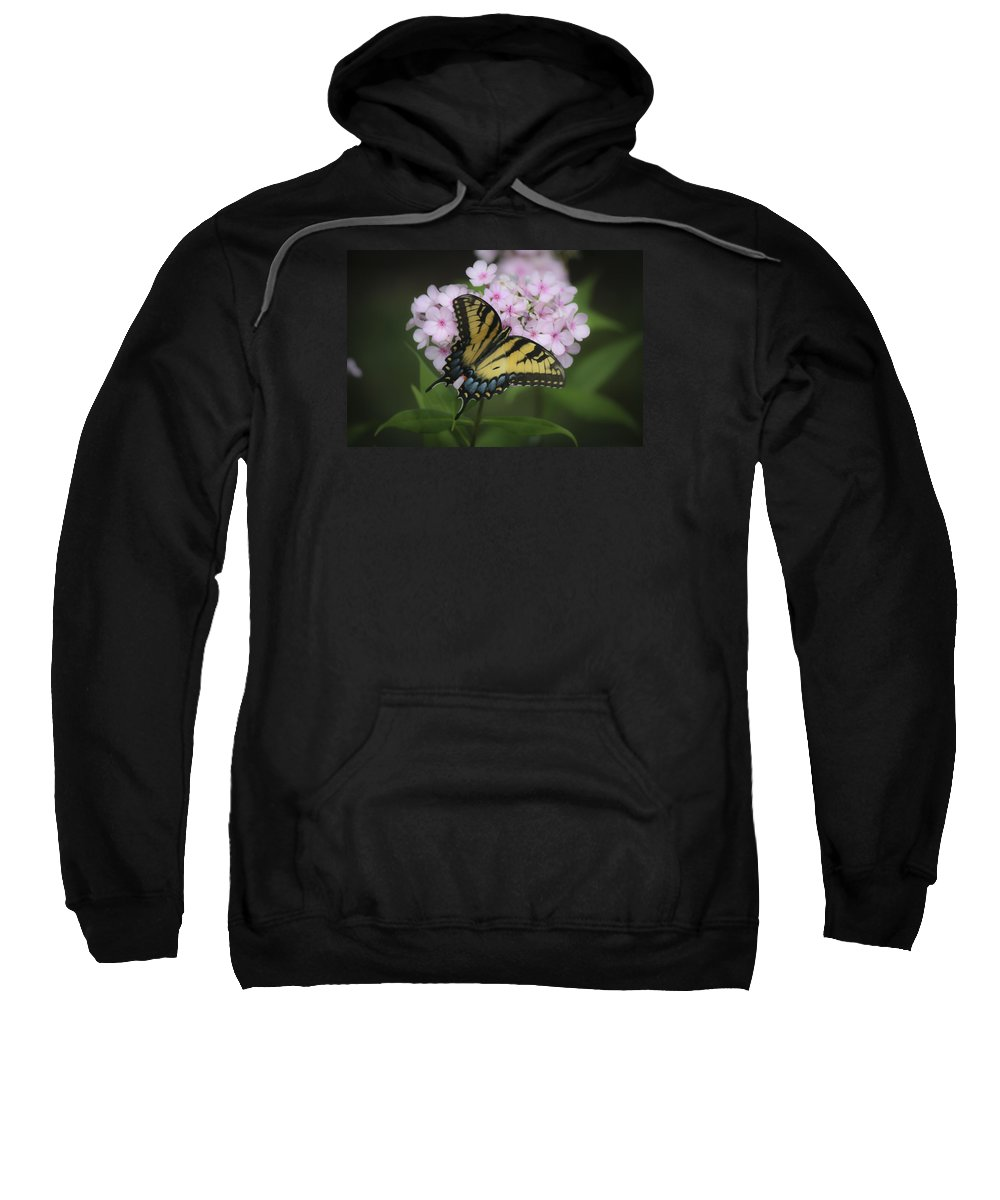 Phlox Sweatshirt featuring the photograph Soft Focus Tiger Swallowtail by Teresa Mucha
