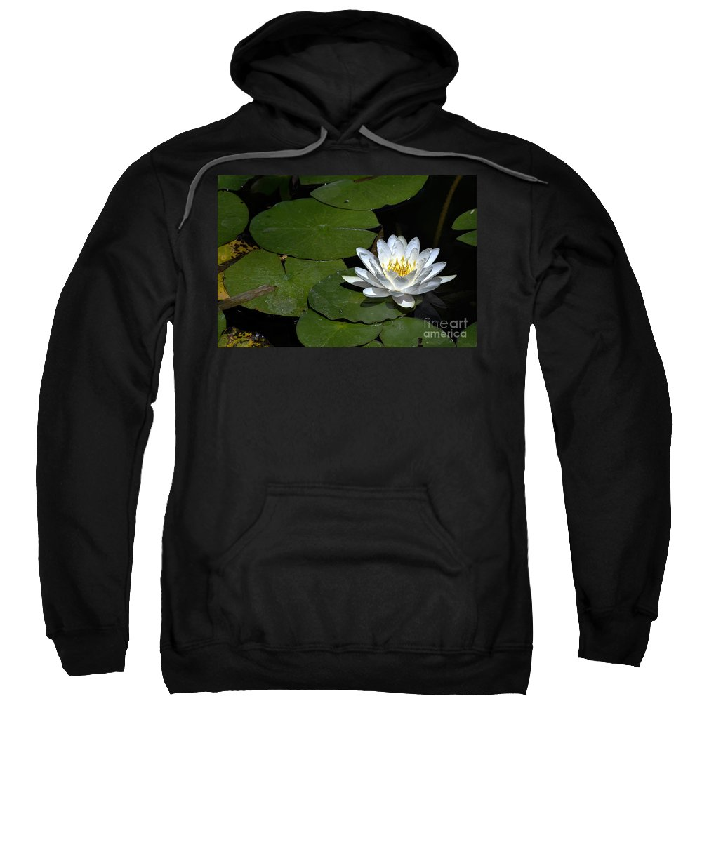 Clay Sweatshirt featuring the photograph Solo by Clayton Bruster