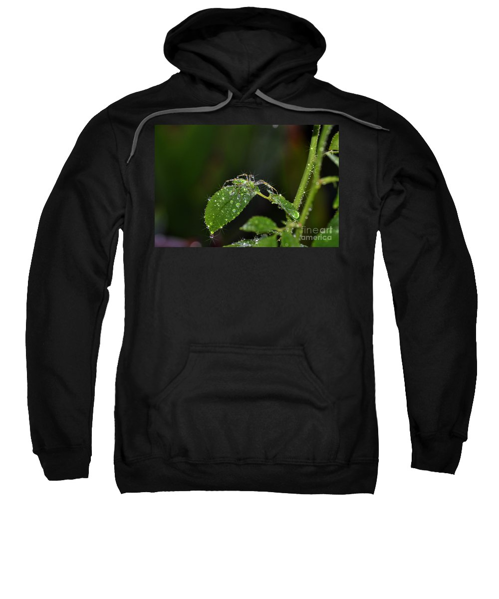 Clay Sweatshirt featuring the photograph Spider And The Shower by Clayton Bruster
