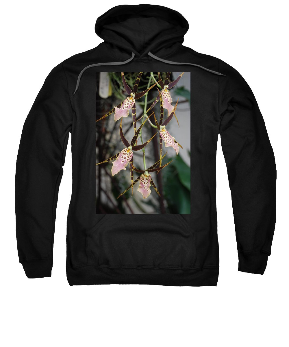 Pink Sweatshirt featuring the photograph Spider Orchids by Rob Hans