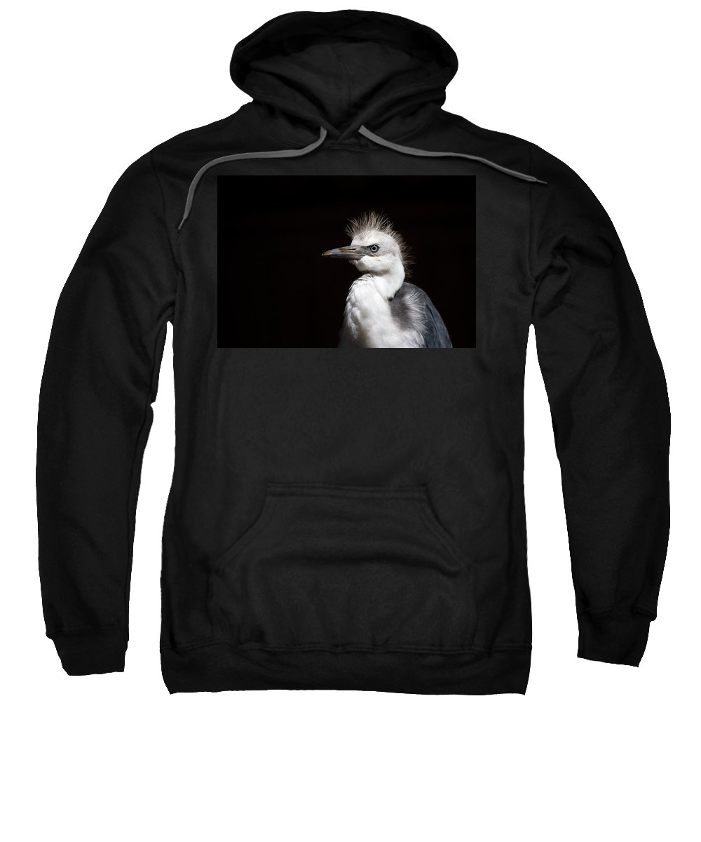 Heron Sweatshirt featuring the photograph Spiked by Mike Dawson