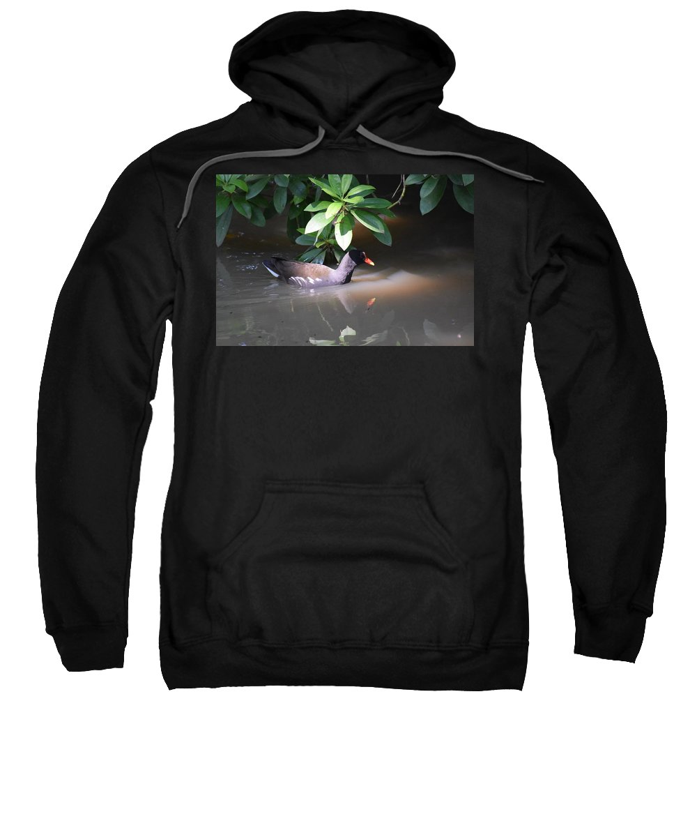 Sun Sweatshirt featuring the photograph Spotlight by Allan Charlton