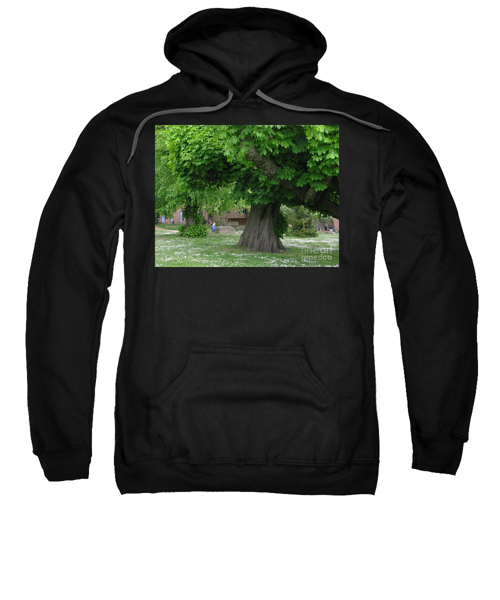 Horse Chestnut Sweatshirt featuring the photograph Spreading Chestnut Tree by Ann Horn