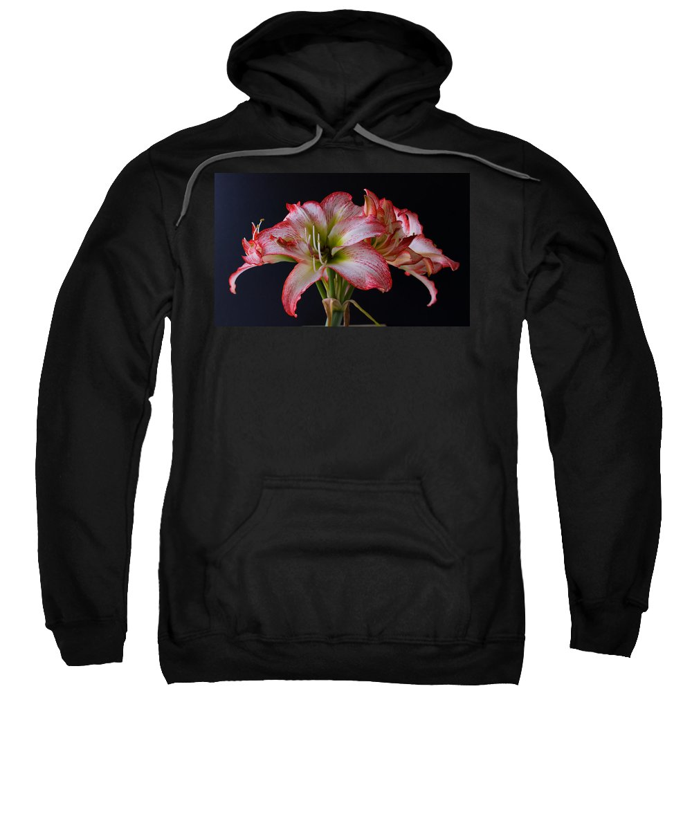 Amaryllis; Flower; Bloom; Blossom; Springtime; Spring; March; Stem. Bulb; Plant; Wildflower; Black; Sweatshirt featuring the photograph Spring Amaryllis by Allan Hughes