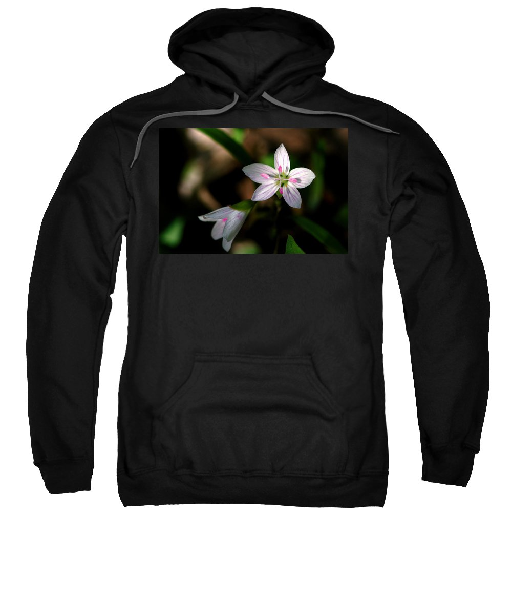 Spring Sweatshirt featuring the photograph Spring Beauty by Jack R Perry