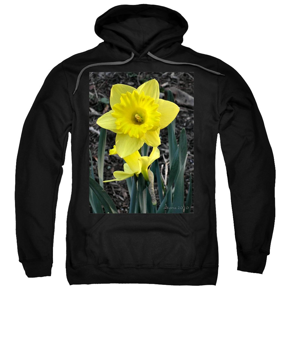 Daffodil Sweatshirt featuring the photograph Spring Daffodil by T Cook