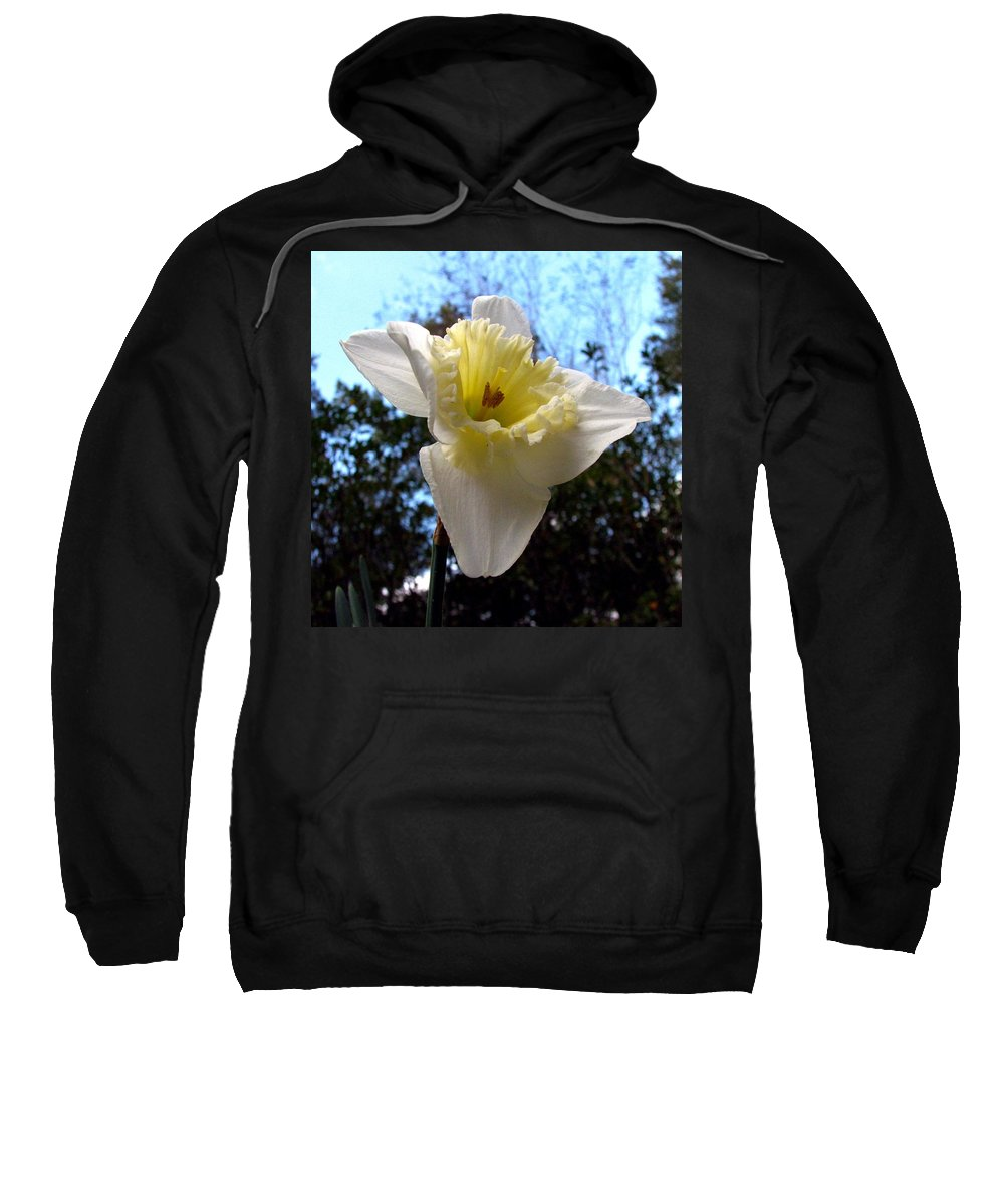 Daffodil Sweatshirt featuring the photograph Spring's First Daffodil 2 by J M Farris Photography