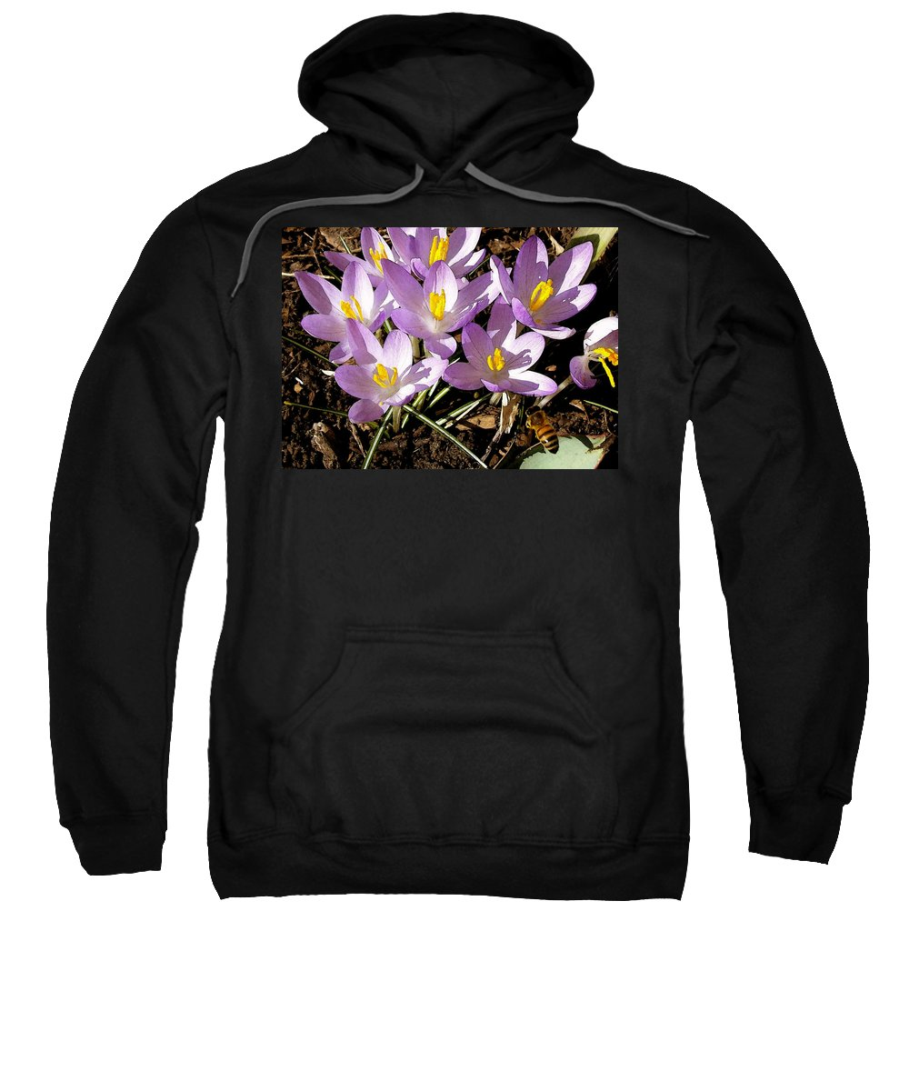Flower Sweatshirt featuring the photograph Springtime Crocuses by Michelle Calkins