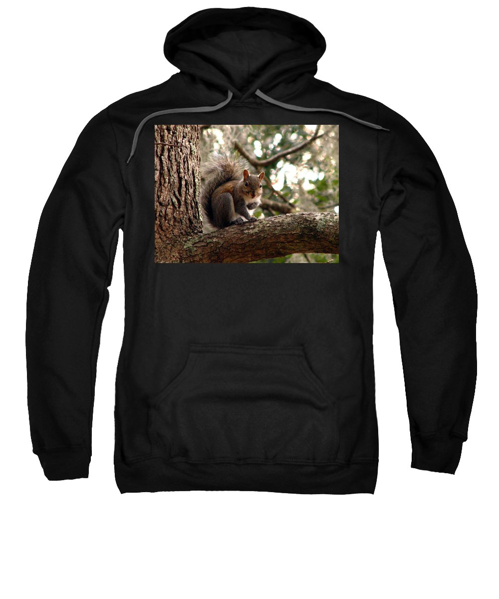 Squirrel Sweatshirt featuring the photograph Squirrel 8 by J M Farris Photography
