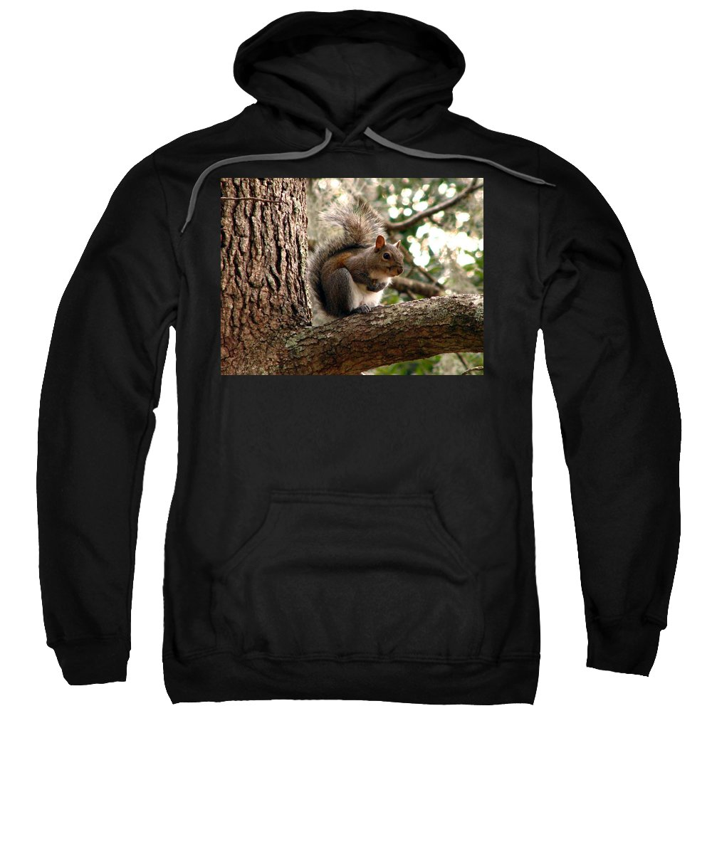 Squirrel Sweatshirt featuring the photograph Squirrel 9 by J M Farris Photography