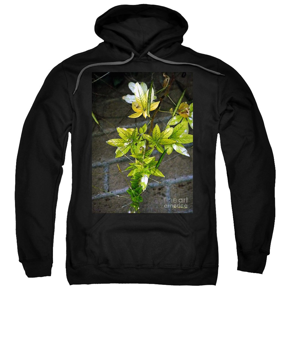 Autumn Sweatshirt featuring the painting Stalk With Seed Pods by RC DeWinter