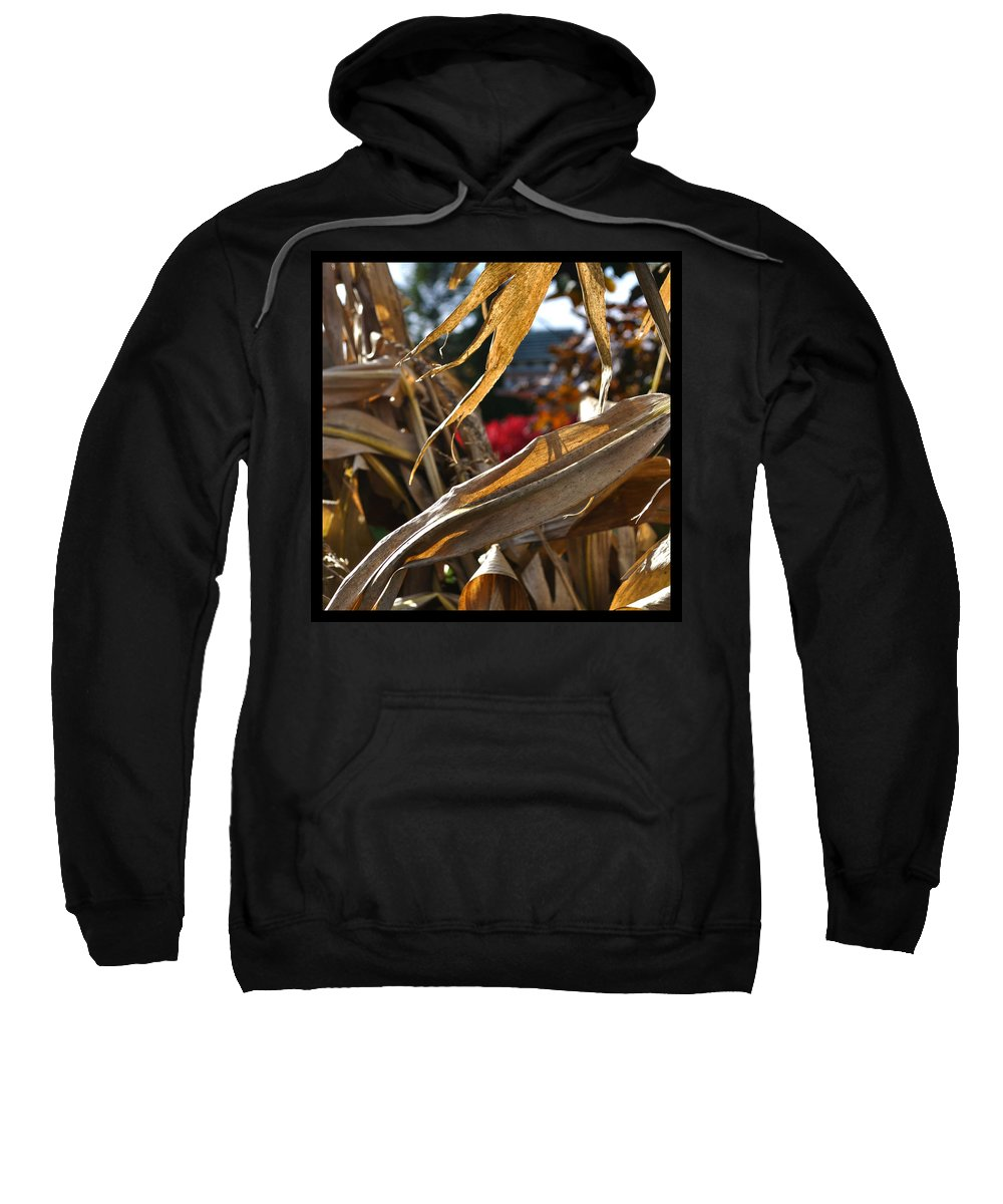 Corn Stalk Sweatshirt featuring the photograph Stalks by Tim Nyberg