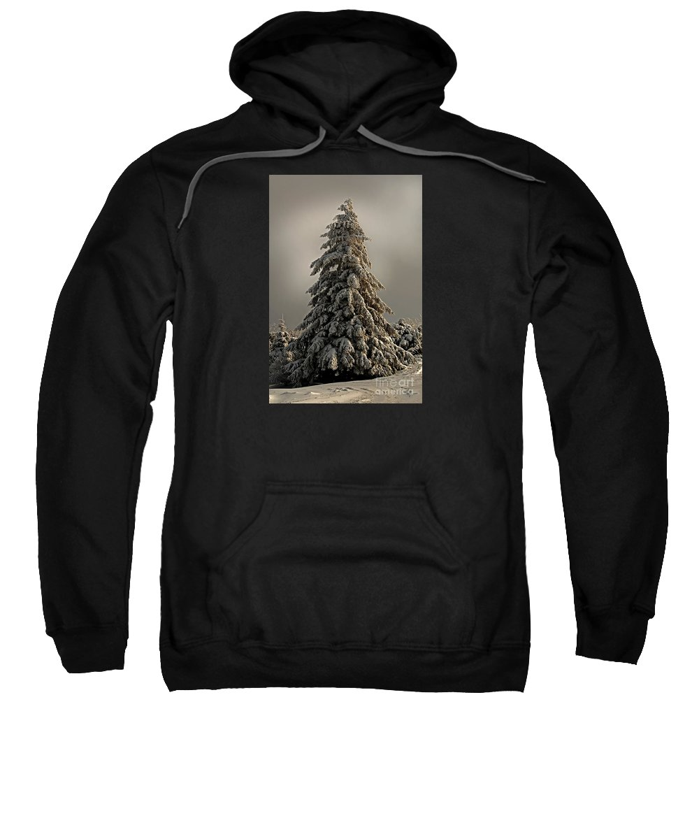 Snow Sweatshirt featuring the photograph Standing Tall by Lois Bryan