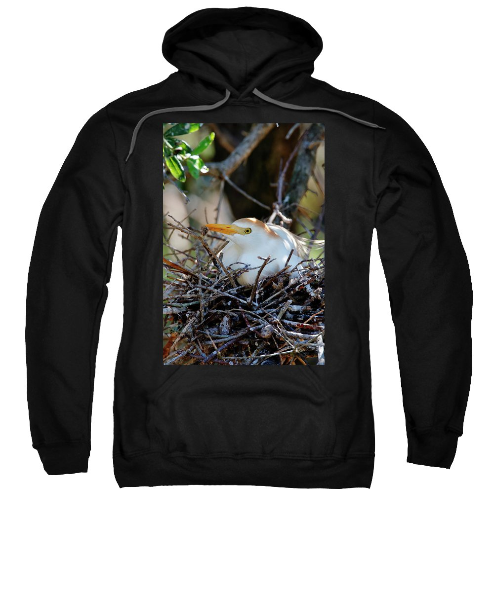 Bird Sweatshirt featuring the photograph Stay At Home Mom by Daniel Caracappa