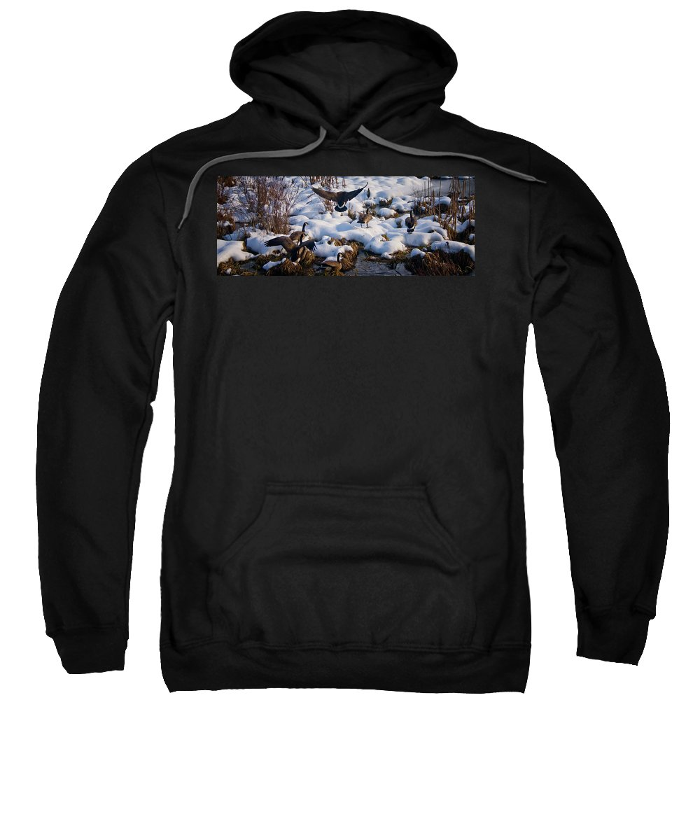Canada Geese Sweatshirt featuring the photograph Staying Put by Albert Seger