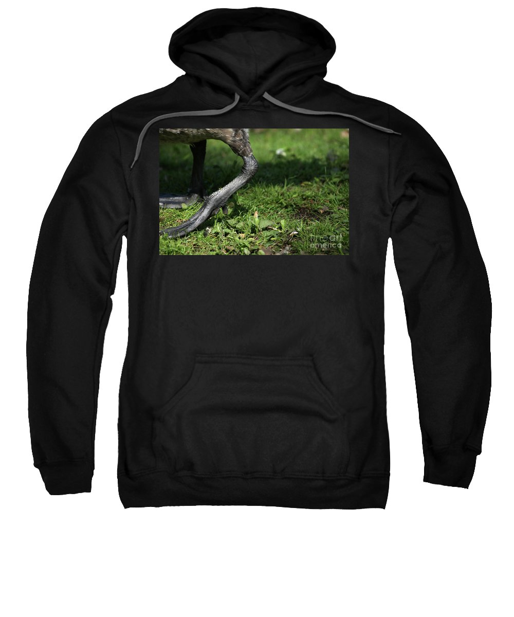 Goose Sweatshirt featuring the photograph Steppin Out by Karol Livote