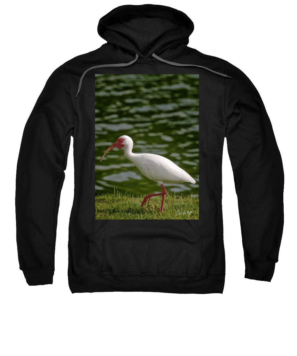 Bird Sweatshirt featuring the photograph Stepping Out by Phill Doherty