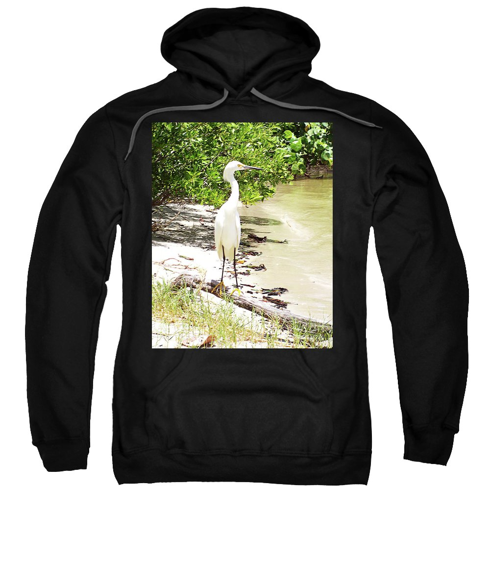 Florida Sweatshirt featuring the photograph Still Looking For Lunch Gp by Chris Andruskiewicz