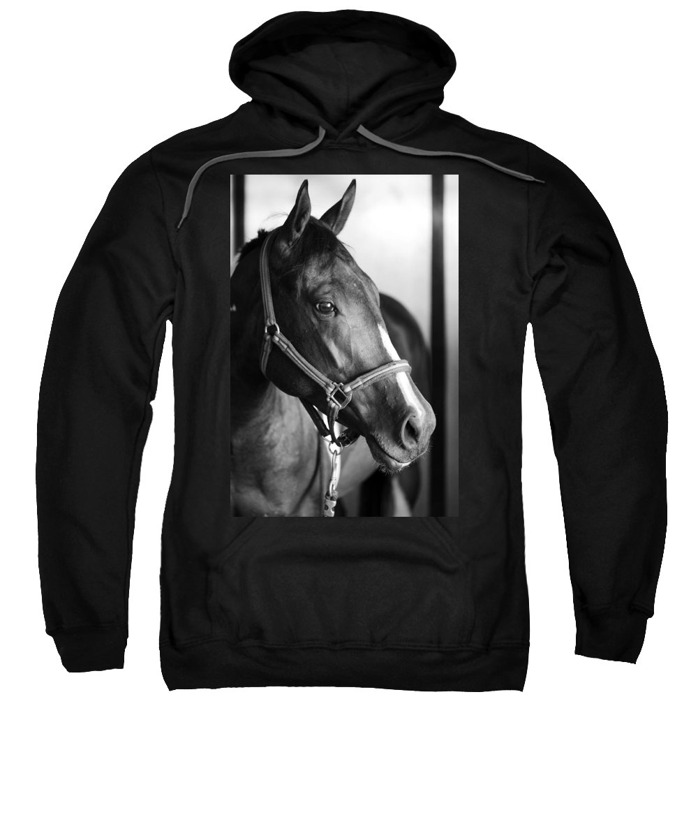 Horse Sweatshirt featuring the photograph Horse And Stillness by Marilyn Hunt