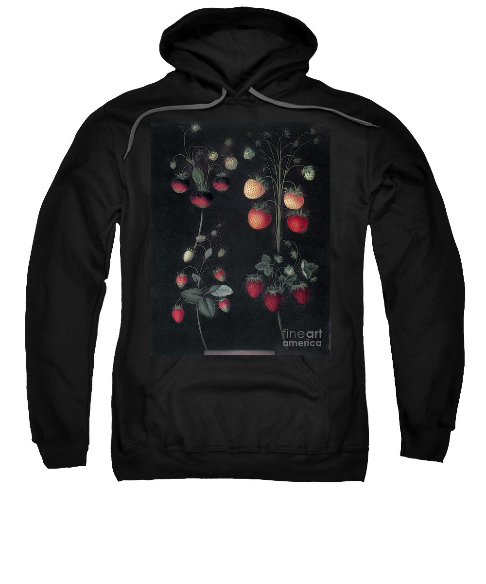 1812 Sweatshirt featuring the photograph Strawberries by Granger