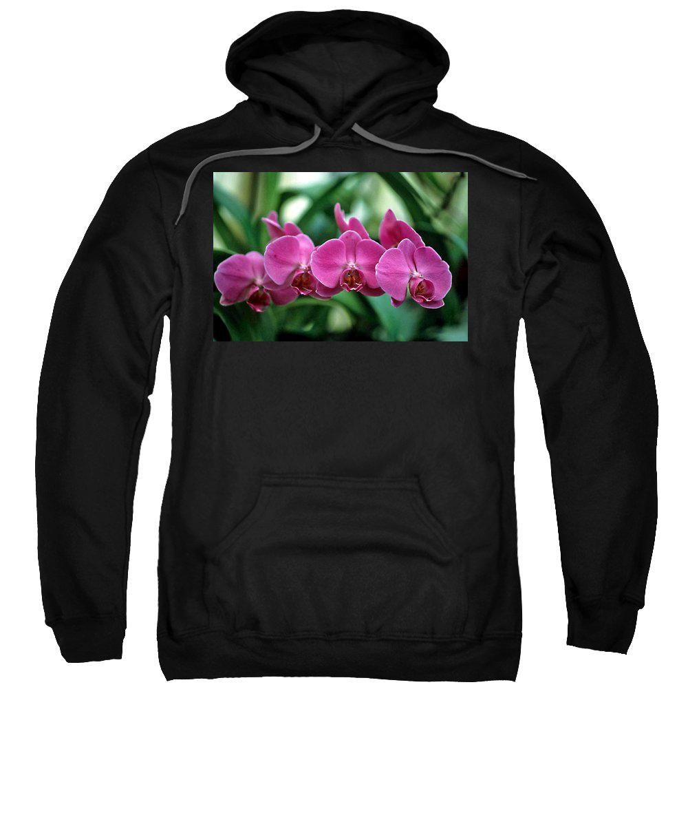 Orchids Sweatshirt featuring the photograph String Of Pearls by Laurie Paci
