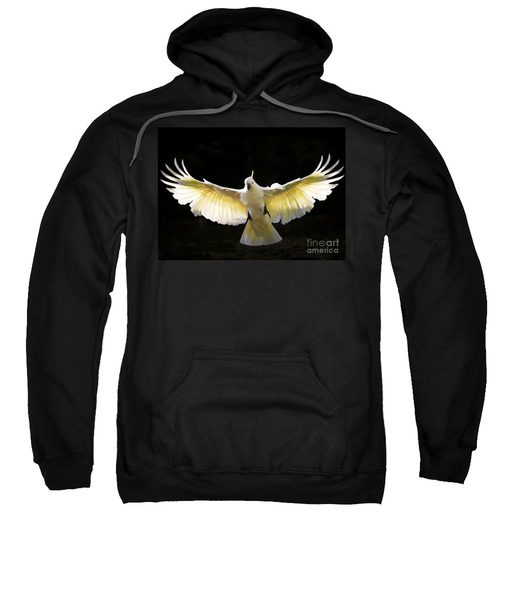 Sulphur Crested Cockatoo Australian Wildlife Sweatshirt featuring the photograph Sulphur Crested Cockatoo In Flight by Sheila Smart Fine Art Photography