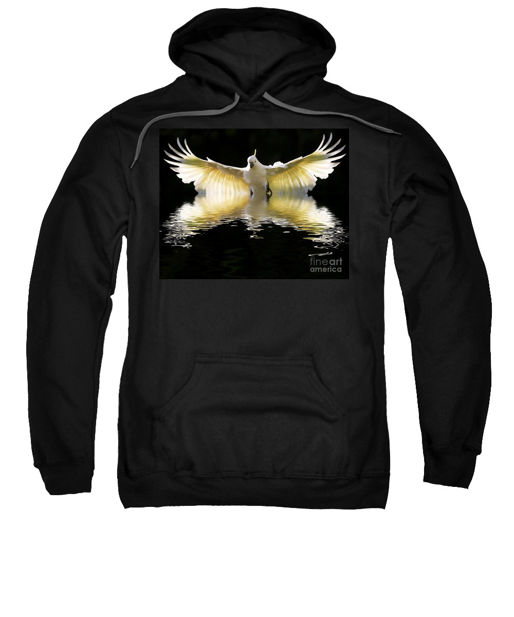 Bird In Flight Sweatshirt featuring the photograph Sulphur Crested Cockatoo Rising by Sheila Smart Fine Art Photography