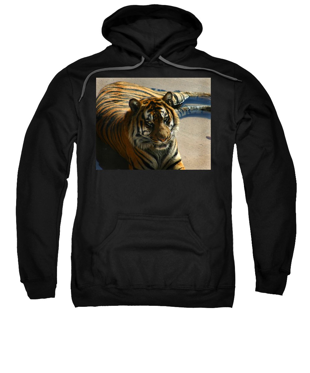 Tiger Sweatshirt featuring the photograph Sumatran Tiger by Anthony Jones