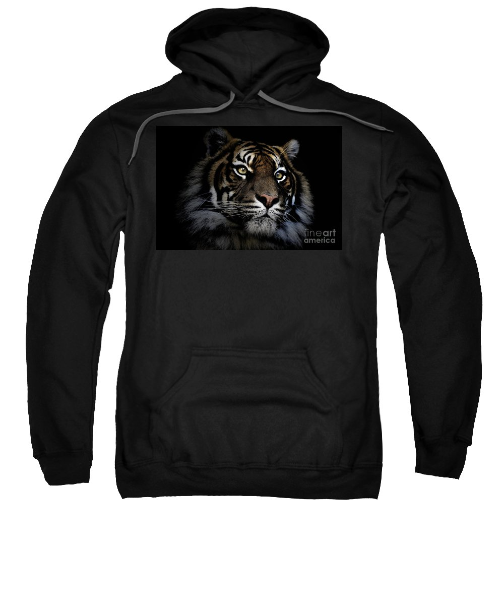 Sumatran Tiger Wildlife Endangered Sweatshirt featuring the photograph Sumatran Tiger by Avalon Fine Art Photography