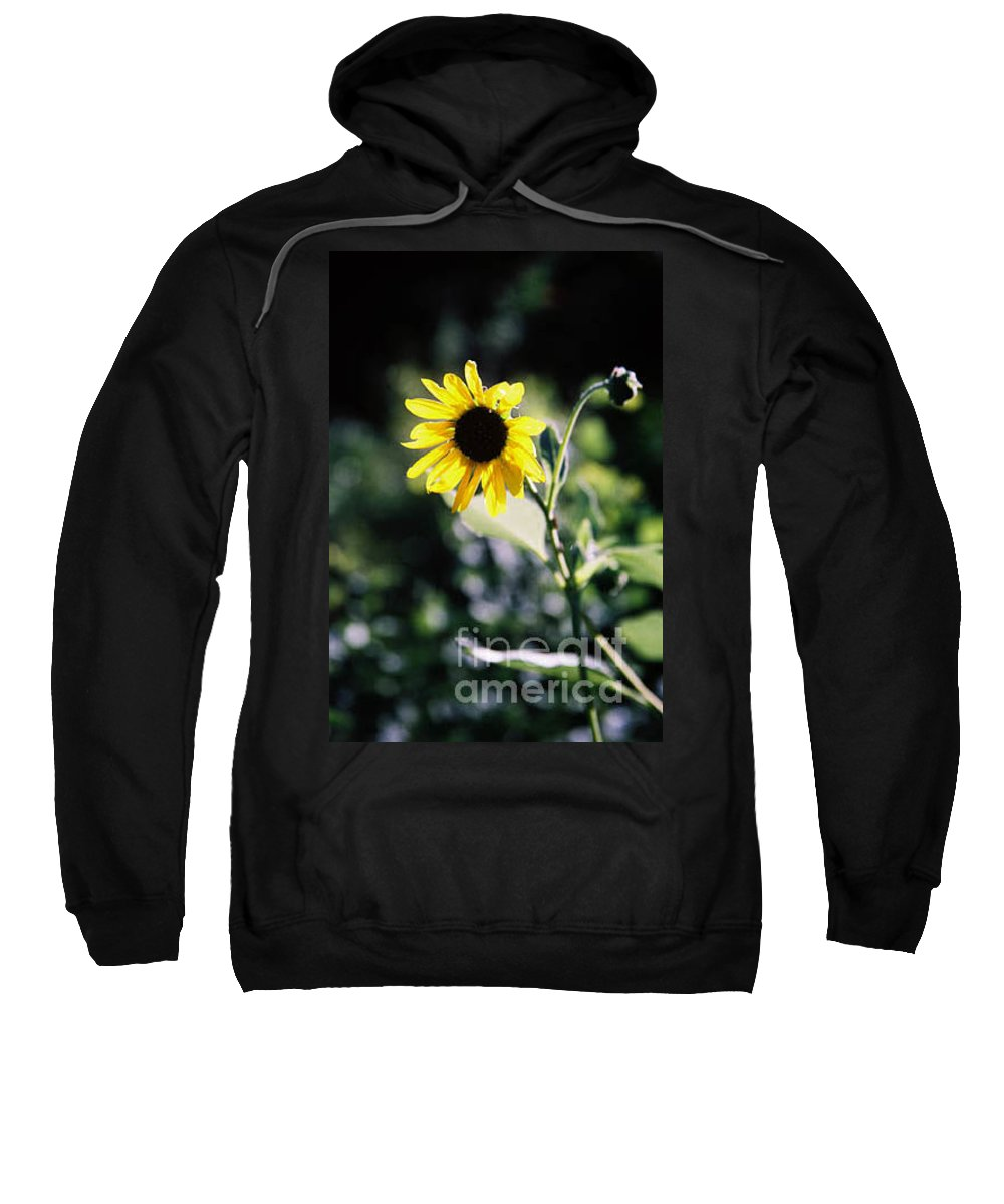 Sunflower Sweatshirt featuring the photograph Summer Sunshine by Kathy McClure
